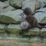 Zoo de Jurques - Otters