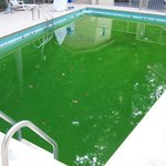 Dirty green pool