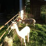 Foto de Sha-Bock Farm Bed and Breakfast