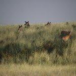 elk herd viewed from our deck