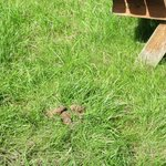 Dog poo in the garden