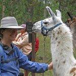 Jo & Lucy, the llama she led.