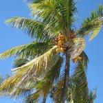 Cocoanut Trees on Property