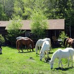a few horses grazing outside one of the cabins