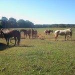 The horses gathering around....