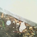 trash around motel