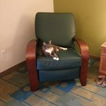 Comfy recliner chair..pet friendly of course!