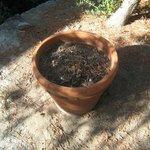Uno dei vasi da fiori senza fiori