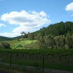 Nannup Countryside