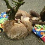 sloth cuddle pile!