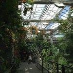 pavillon tropical