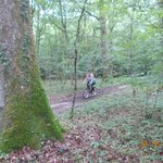 Cycling in the Forest by site