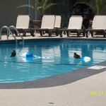 This picture of the pool area shows that even the birds love the pool!  LOL