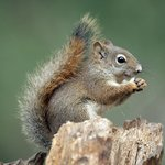 Squirrel dining al fresco in Silver Gate