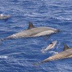 ......trop top ..... les dauphins.....