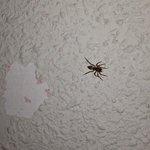 diferentes tipos de arañas en las paredes