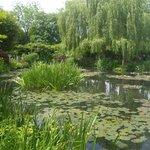 Jardin C.Monet