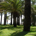 The lovely grassy oasis along the beach.