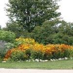 Beautiful August Flowers!