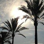 Ljuvligt svajande palmer efter strandpromenaden