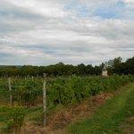 vineyards between highway and the winery buildings