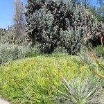 massive clusters of desert vegetation