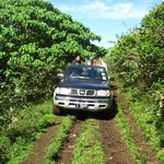 Our 4x4 Island Tour, wild horses and wild coastline