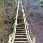 Jacob's Ladder in Victoria Park