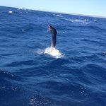 A 25kg sail fish in action, awesome experience