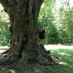 I lOvE this tree!!!