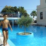 The olive tree pool
