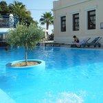 Veggera Olive tree pool