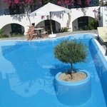 Olive tree pool,view from pool terrace