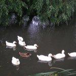 Loved the ducks