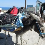 Ucis (sp?) the donkey who totes your bags to the room