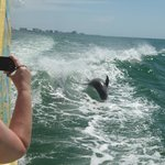 Dolphin jumping in the wake