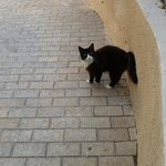 1 Bedroomed Apartment - New Friend