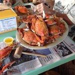 Ozzie's Crabs!