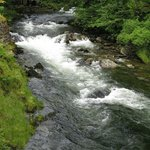 Ketchikan Creek, next to the Married Man's Trail