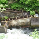 Fish ladder (we visited mid-June, a couple weeks before the salmon run)
