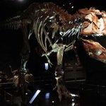 ロイヤルティレル古生物博物館!恐竜がお迎えしてくれます。