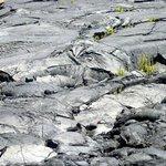 Volcano National Park Hilo Hawaii