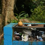 Overfllowing rubbish bin