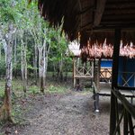 Jungle side of this row of cabins
