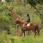 Isabella on Mon Ami & close up of Giraffe bull