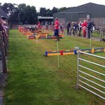 sheep racing at hall hill farm