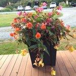 Pretty flowers on veranda