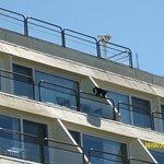 Monos en los balcones