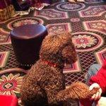 Lulu LOVES this hotel!