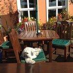 Coco enjoying the sunshine